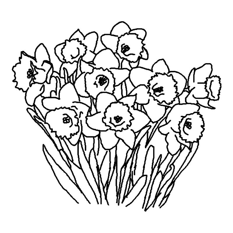 Un Buchet De Narcise